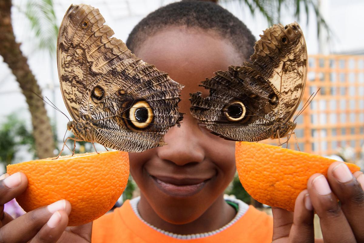 20. Шестилетний Бьорн позирует с совиными бабочками для Национального исторического музея, Центральн