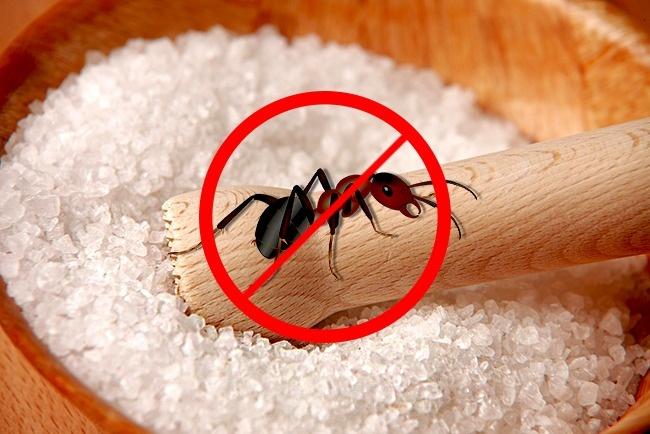 © OpenClipart-Vectors/Pixabay  © andreas160578/Pixabay  Чтобы вывести муравьев, опрыскай