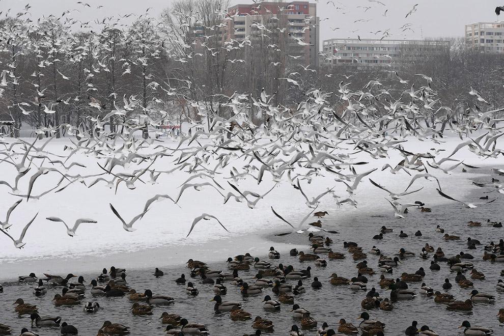 17. Сила природы. Местный охотник нашел лисицу, вмерзшую в лед на реке Дунай. Животное упало в