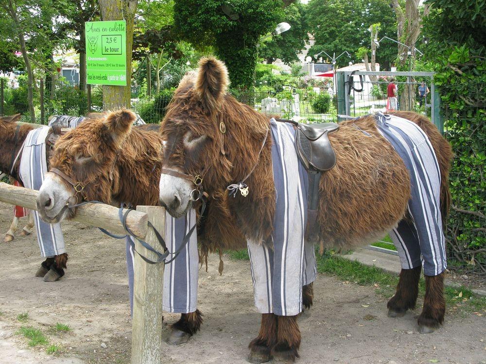 poitou-donkeys-36.jpg