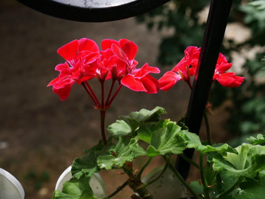Цветник за окном