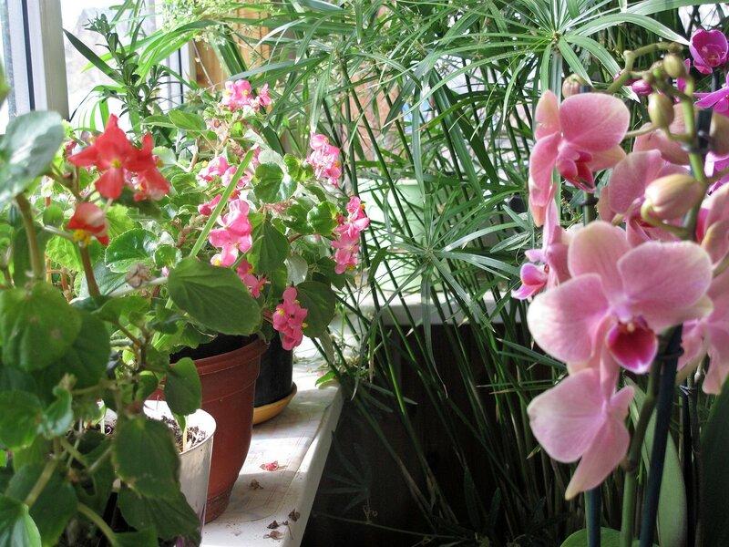 Весна в зимнем райском садике