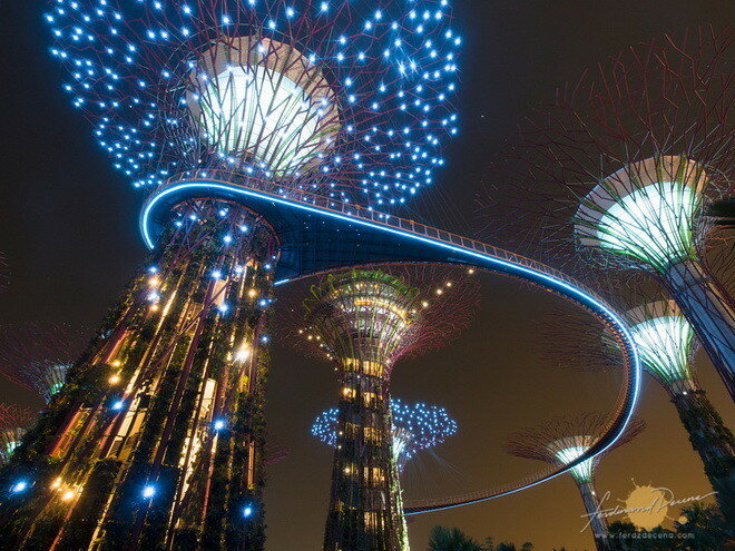 Парк «Сад у Залива».Сингапур