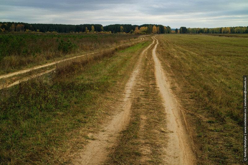 вдоль дорог на поле