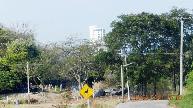 Как я фотографировалась под пальмой с обезьяной. Хуа Хин