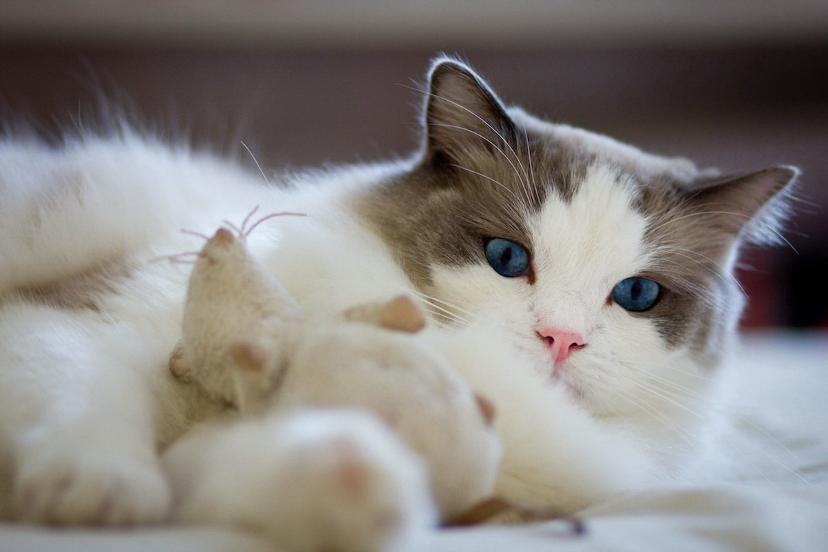 Затишний кіт