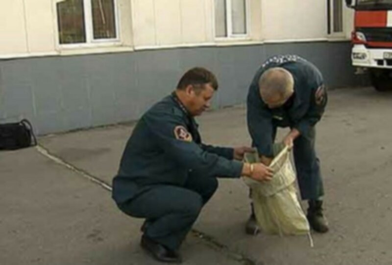 В Москве питон вывалился из окна девятиэтажного дома