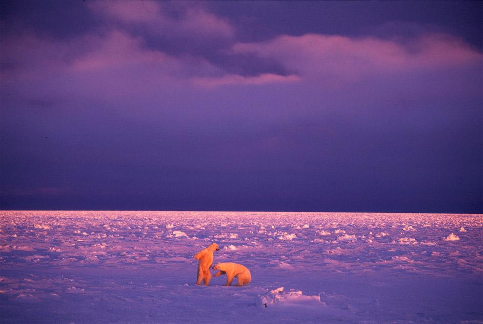 20. Весна в Арктике.