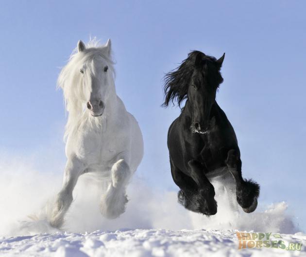 Ученые: Лошади могут просить улюдей опомощи