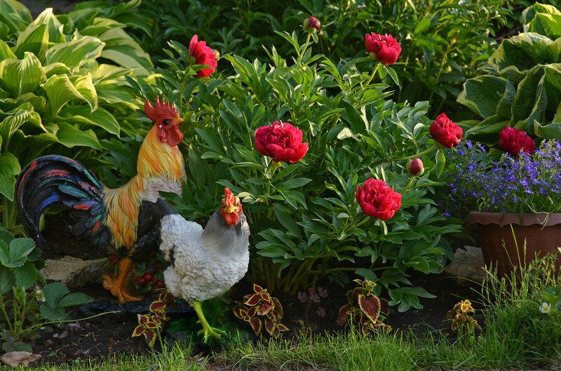 Когда цветут пионы