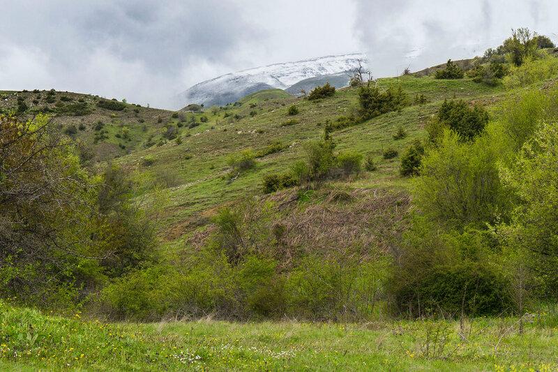снежные вершины над зелеными лугами