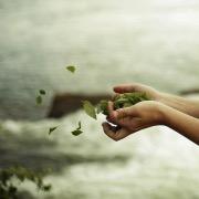 Листья в руках