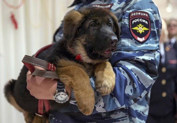 Российский щенок нашел подругу во Франции