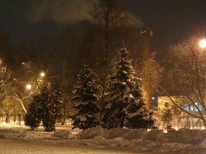 Заснеженные ели - Новый год в Великом Новгороде