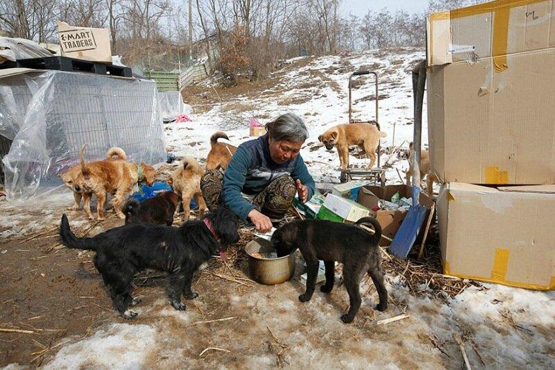 Женщина в Южной Корее спасла более 200 собак