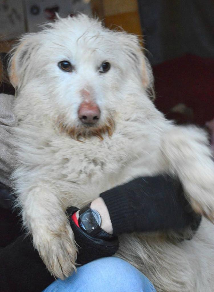 Бартоломью - Бартик собака из догпорта