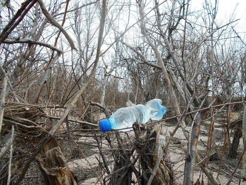 Ветви ... и бутылка с водой ... DSCN4387.JPG