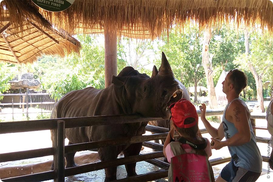 Кормление носорогов в зоопарке Кхао-Кхео