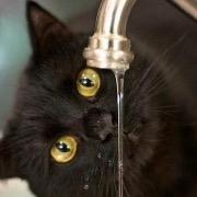 Кот смотрит на воду