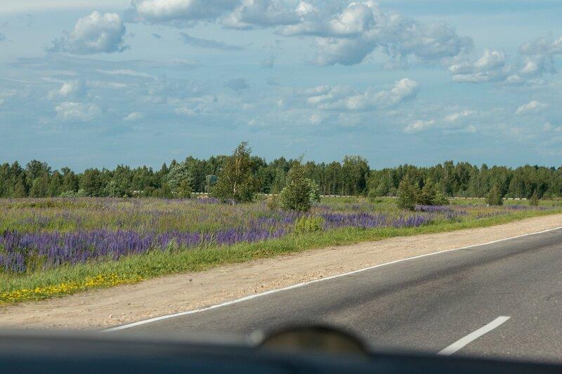 Пейзаж вдоль дороги, Нижегородская область