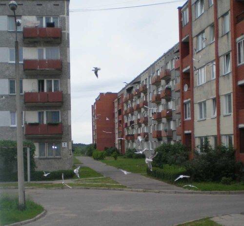 http://img-fotki.yandex.ru/get/4300/anton-liliya.2/0_459c2_92a90981_L.jpg