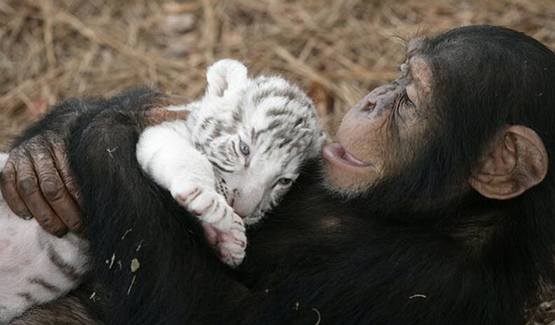 Картинки с собаками обезьянками тиграми, винтажном стиле своими