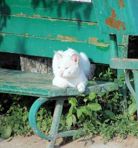 Белый кот задумался