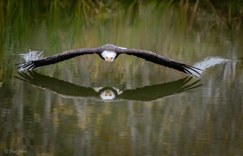 Птичий ураган