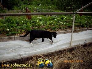 кошка Варежка