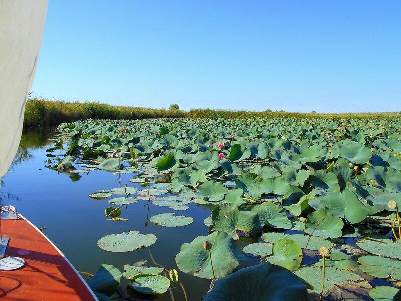 У плантации водного растения экзотического ... DSCN0504.JPG