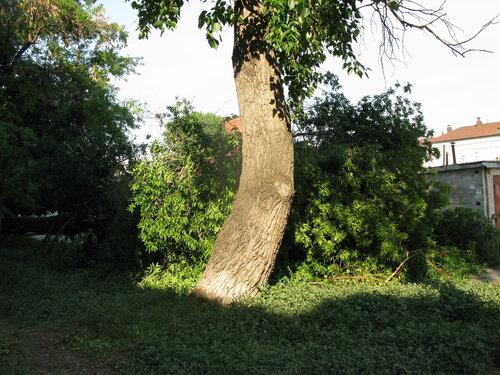 Крушение дерева об автомобиль - Курган - бар Маэстро