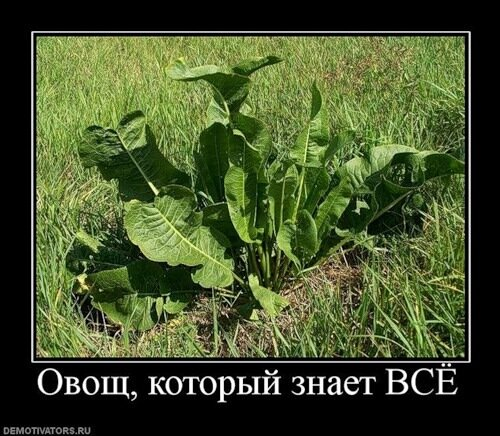 http://img-fotki.yandex.ru/get/4301/c-olia2009.c/0_30979_2ddf4152_L.jpg