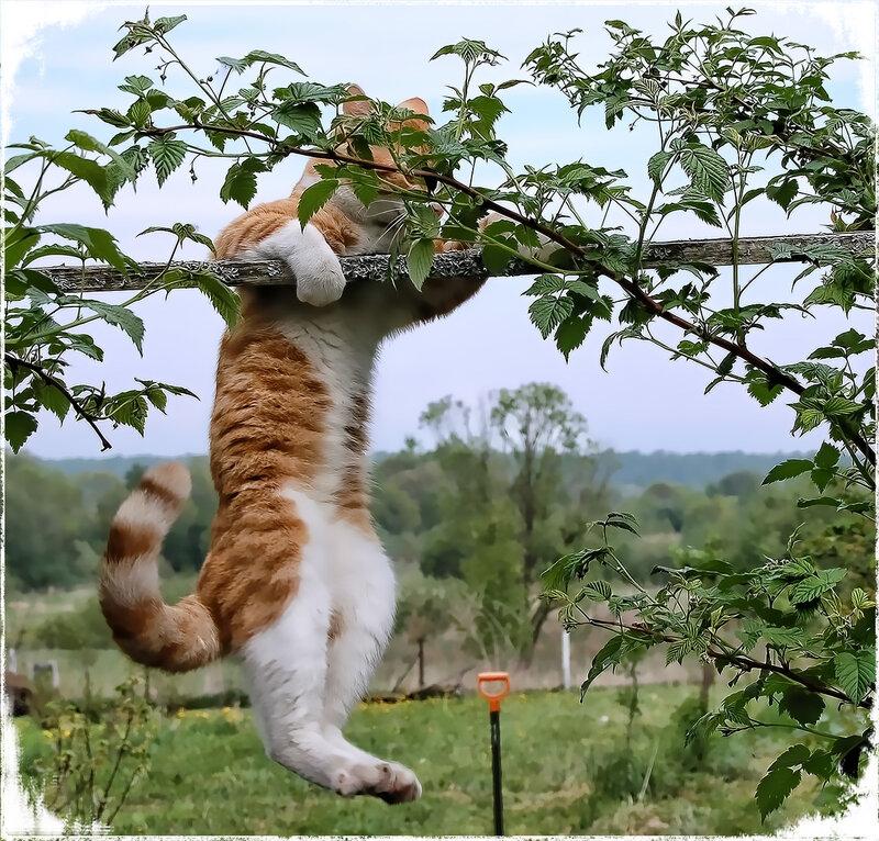 Днем рождения, смешные картинки кот на дереве