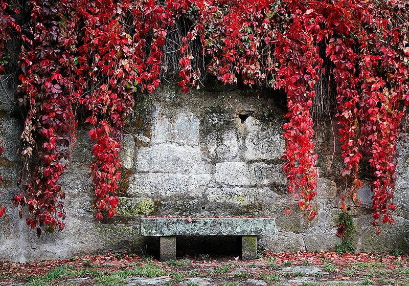 красные листья - серые камни