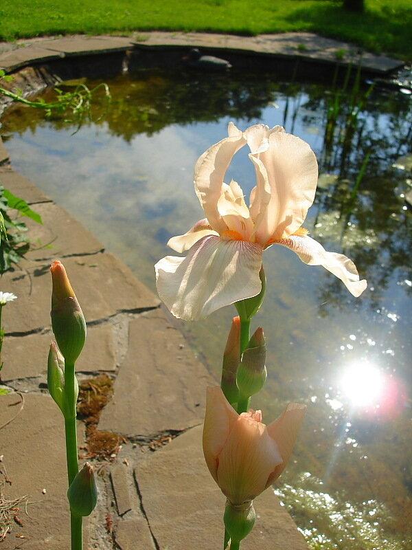 Весна,с.Остров, подворье,райский садик