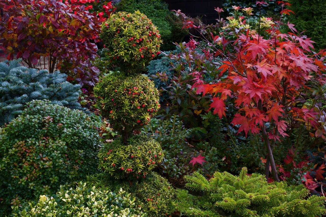 Английский сад для всех сезонов часть