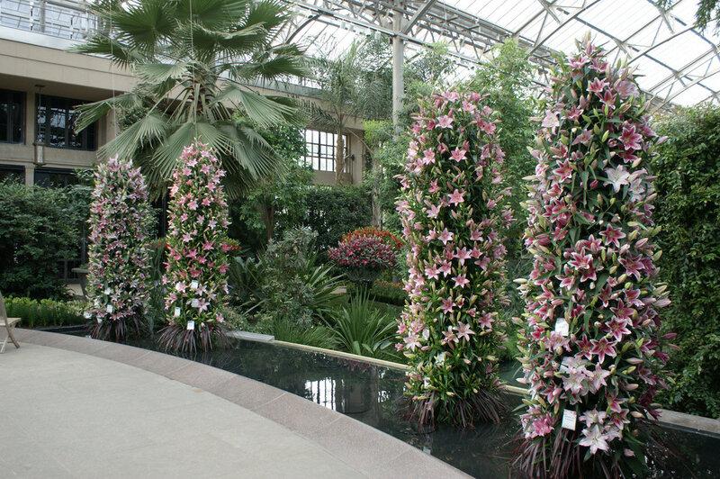 выставка лилий в Северной