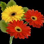 цветы-(258).png
