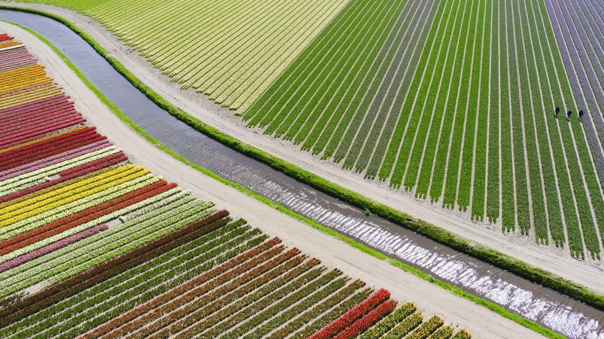 Третье место в категории «Места»: «Тюльпановые поля», автор Anders@andersa.com