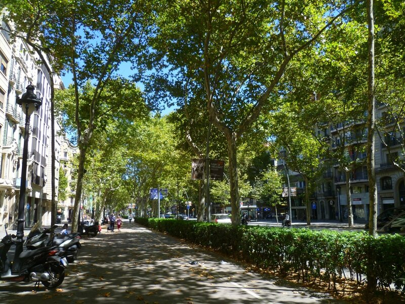 Барселона. Никому не мешают деревья.