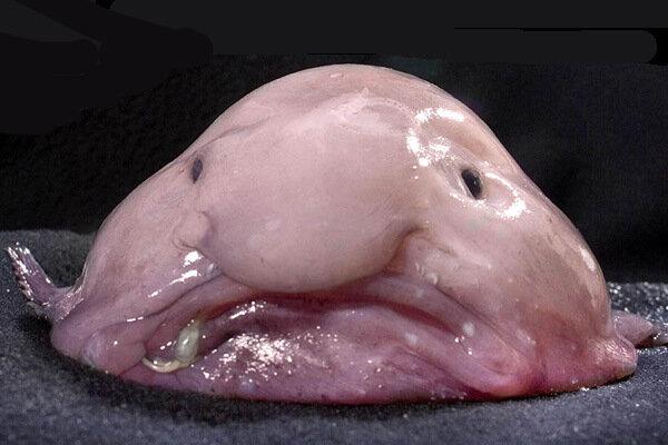 Удивительные рыбы :: фотография 2.
