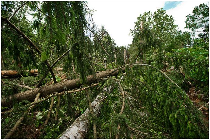 виды поваленного леса. Россия