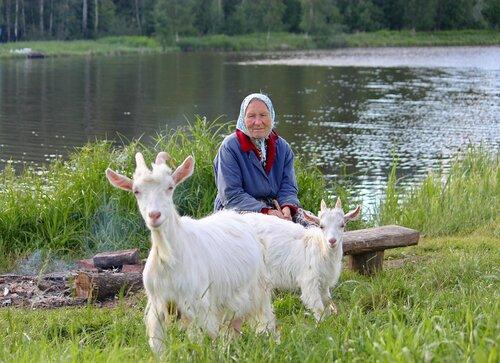 Бабушка с козами