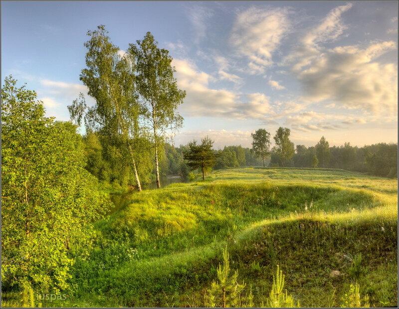 Берёзовое утро солнечные тропинки