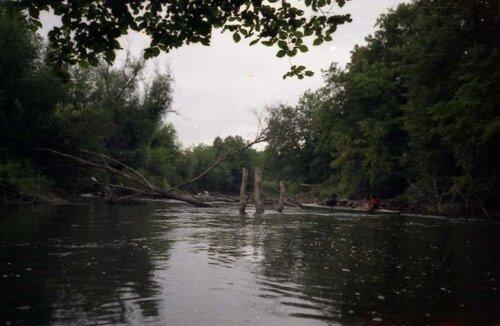 убей бобра - спаси дерево