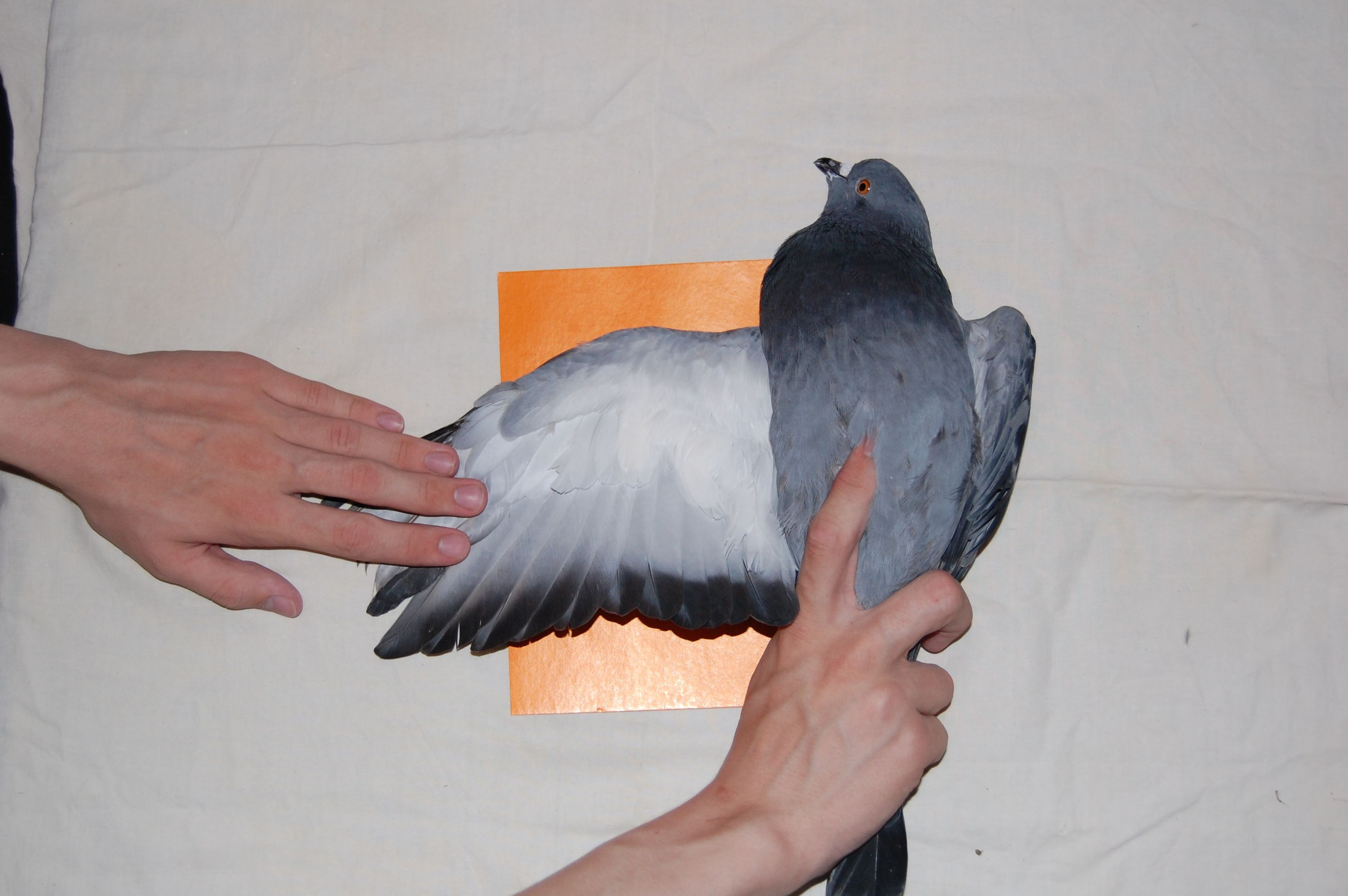Крыло фото