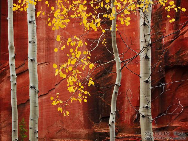 Неожиданно яркие и цветущие снимки Гая Тэла (Guy Tal)