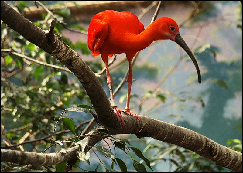 Птицы стегазора. (зубастка,изумирка,луничка,солничка,фениминго,синянка,феникс малый.