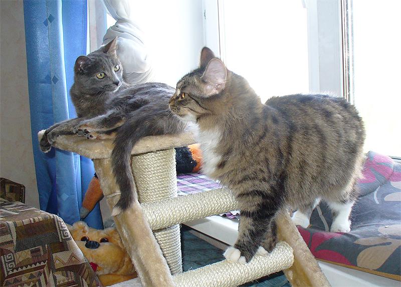 Дуся и Тинки