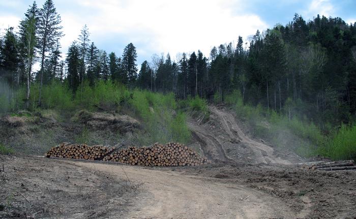Воровство леса в Приморье